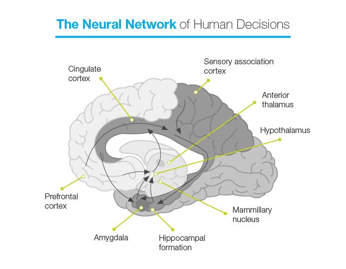 Neural Network of Human Development